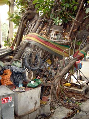 thailand tree